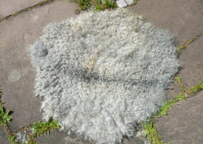 Veggiefell aus wunderbaren Gotlandlocken, auf stabilem Bergschafvlies gefilzt, 99 €